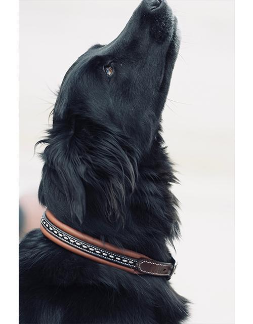 collier pour chien havane Pénélope store