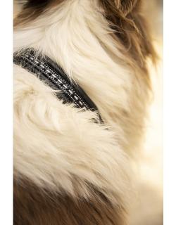 Dog Collar - Black