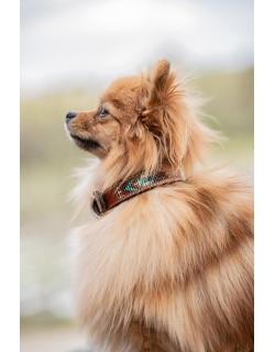 Pearl Dog Collar - Brandy &...